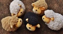 Familienkonflikte – Bist du auch das schwarze Schaf der Familie?